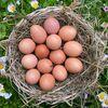 Фото к позиции меню Куриные яйца с фермы